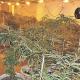 Las plantas estaban en diferentes fases de crecimiento y algunas a punto de ser vendidas