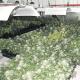 Cada cop es detecten més plantacions de marihuana