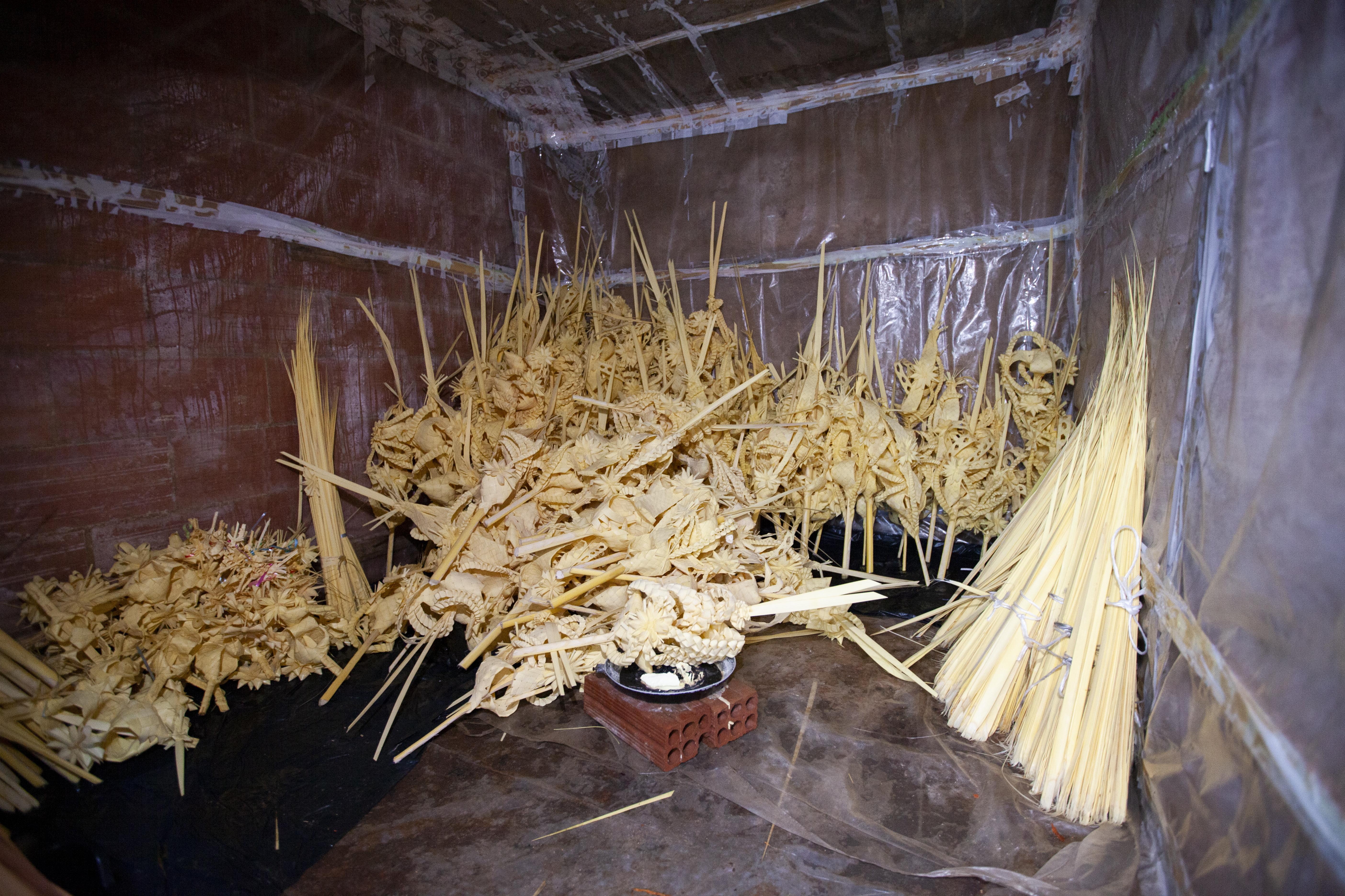 Les palmes han de guardar-se en una habitació sense entrada de llum, amb aigua i sofre / Victòria Rovira