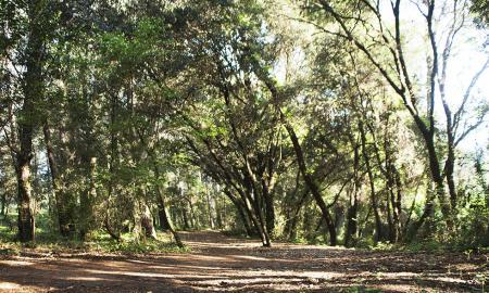 Bosc de Volpelleres