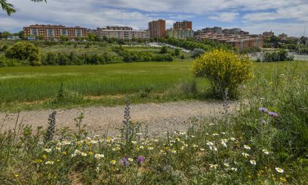 Solar on es construiran els nous habitatges de lloguer social de la Roureda / LL.F.